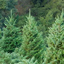 photo of alhambra christmas tree farm martinez ca united states