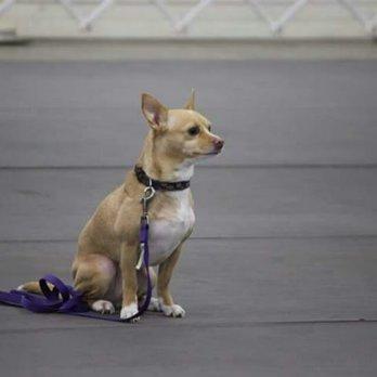 Dog Cat Veterinary Clinic Fresno Ca