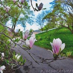rochester lilac festival 119 photos 35 reviews festivals