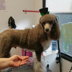 Best poodle groomer portland oregon