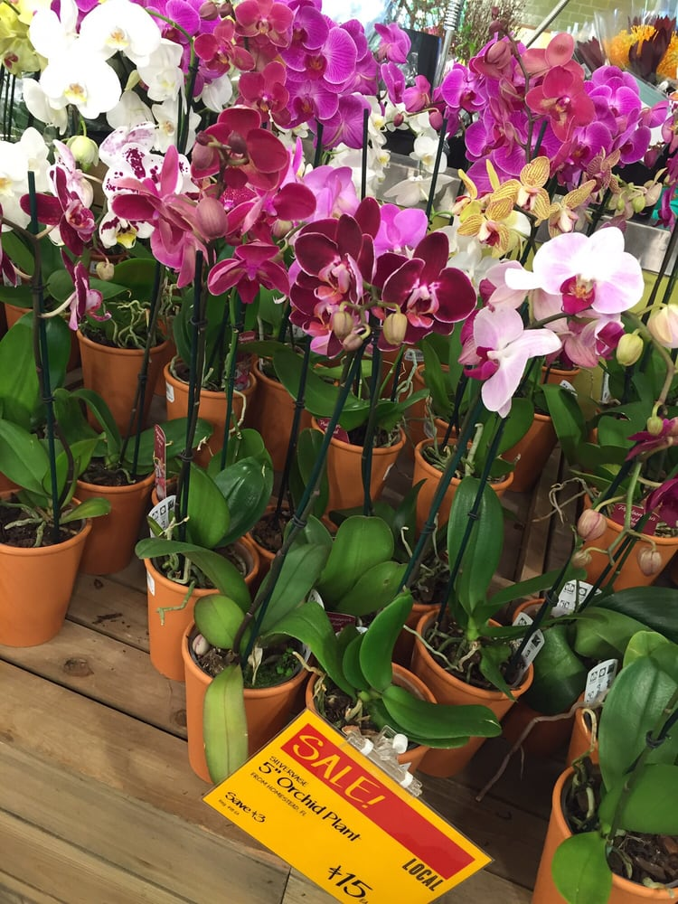 Bring home an orchid plant. Or drop it off at my home. - Yelp