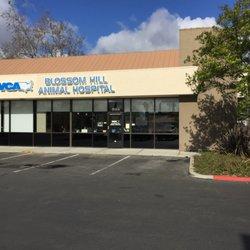 VCA Blossom Hill Animal Hospital - 21 Photos & 87 Reviews