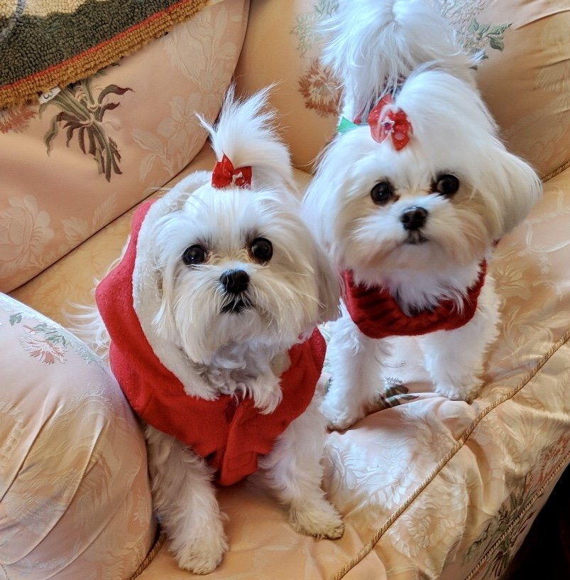 Amy's Doggie Doos: 154 Rt 17K, Newburgh, NY
