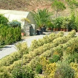 Evergreen Gartenbau aha gartenbau 12 photos gardeners härdlistrasse 14