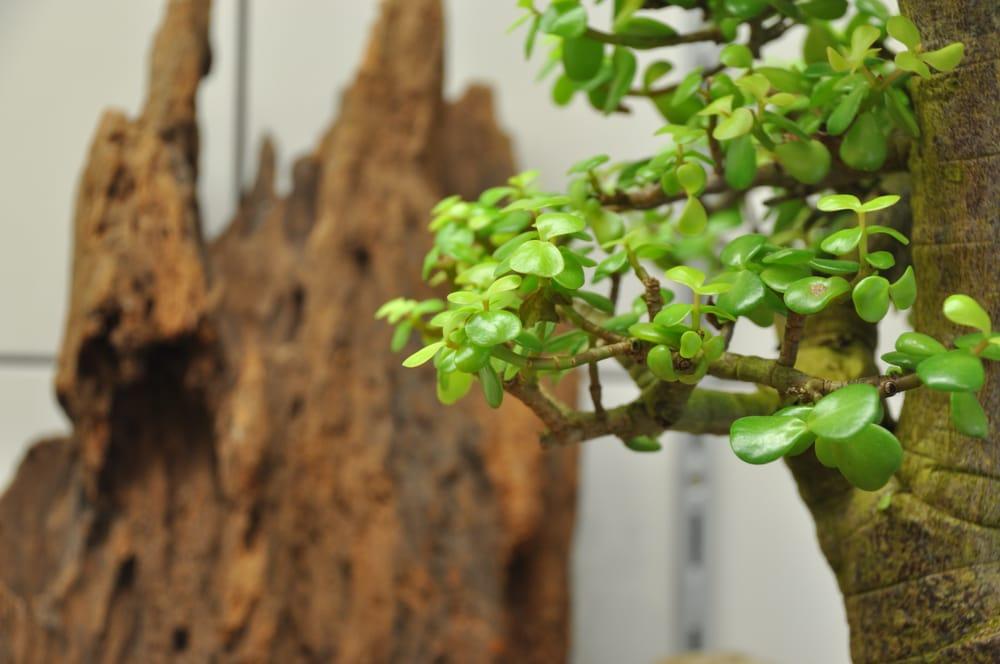 japan bonsai berlin 29 fotos e 13 avalia es viveiros jardinagem kantstr 124 b. Black Bedroom Furniture Sets. Home Design Ideas