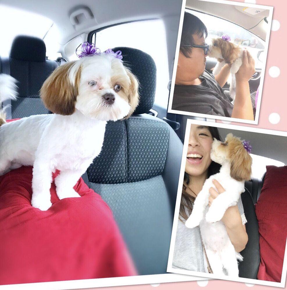Plush Pups Pet Boutique and Spa
