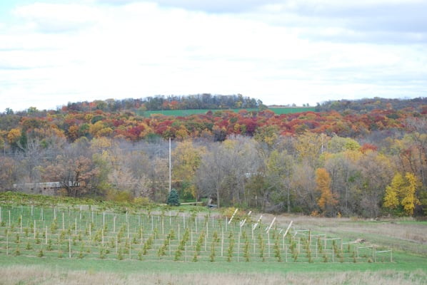 Hawk's Mill Winery W8170 Pilz Rd Browntown, WI Wineries - MapQuest on