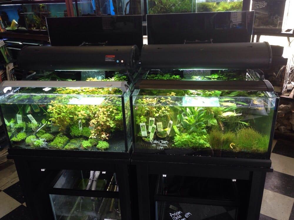 Fish 4 u 13 photos 13 reviews pet stores millcreek for Fish stores in utah