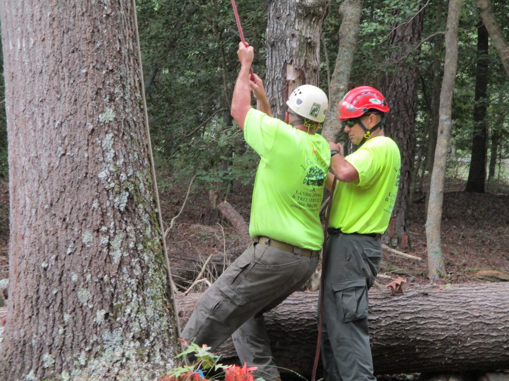 L.G. Scott Landscaping & Tree Service: 12700 Sterling Heights Ln, Providence Forge, VA