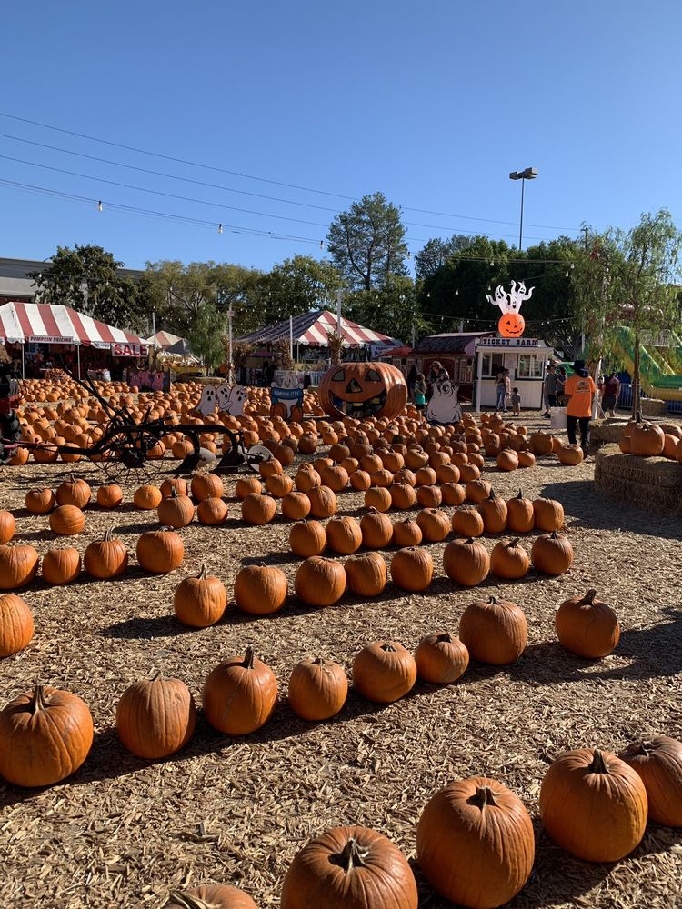 Pumpkin City's Pumpkin Farm