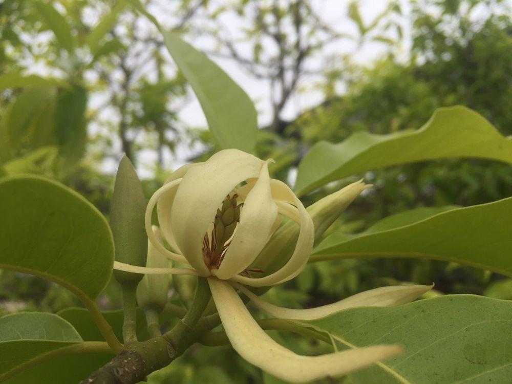 Mimosa Nursery - 153 Photos & 18 Reviews - Nurseries