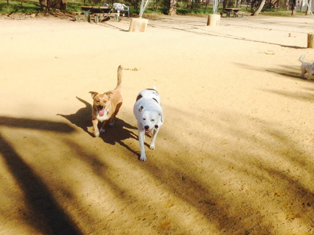 Dog Fit Unlimited: Boulder Creek, CA