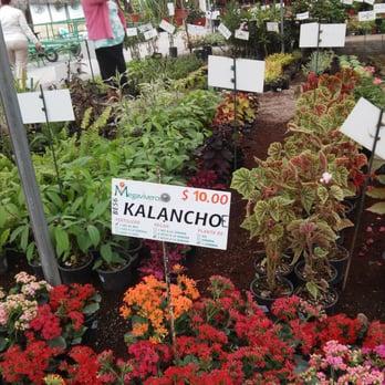 Megaviveros 33 fotos viveros y jardiner a manuel for Viveros de plantas en atlixco
