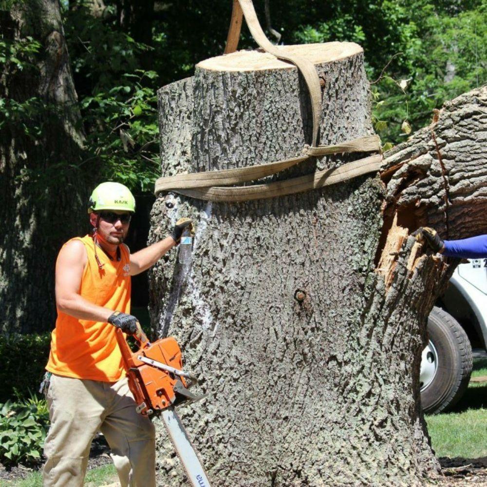 Rick's Expert Tree Service: 1907 Bensalem Blvd, Bensalem, PA