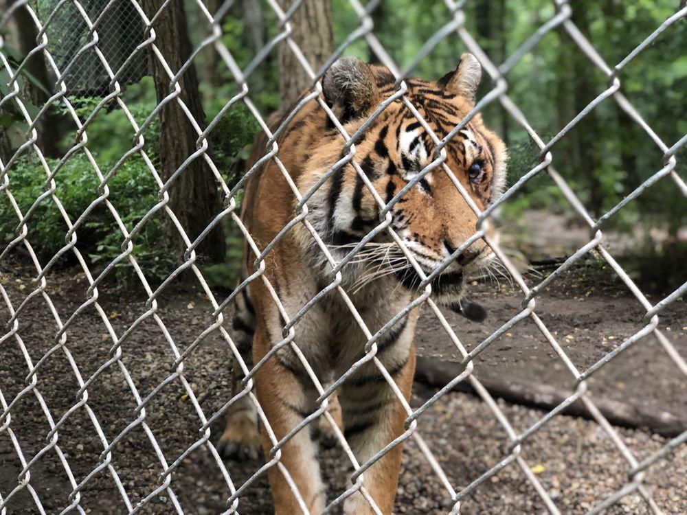 Exotic Feline Rescue Center: 2221 E Ashboro Rd, Centerpoint, IN