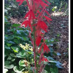 Photo Of Freedom Park Bird And Butterfly Garden.   Atlanta, GA, United  States