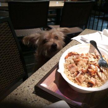 Lazy Dog Cafe Yelp Rancho Cucamonga