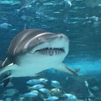 Photo Of Ripley S Aquarium Myrtle Beach Sc United States