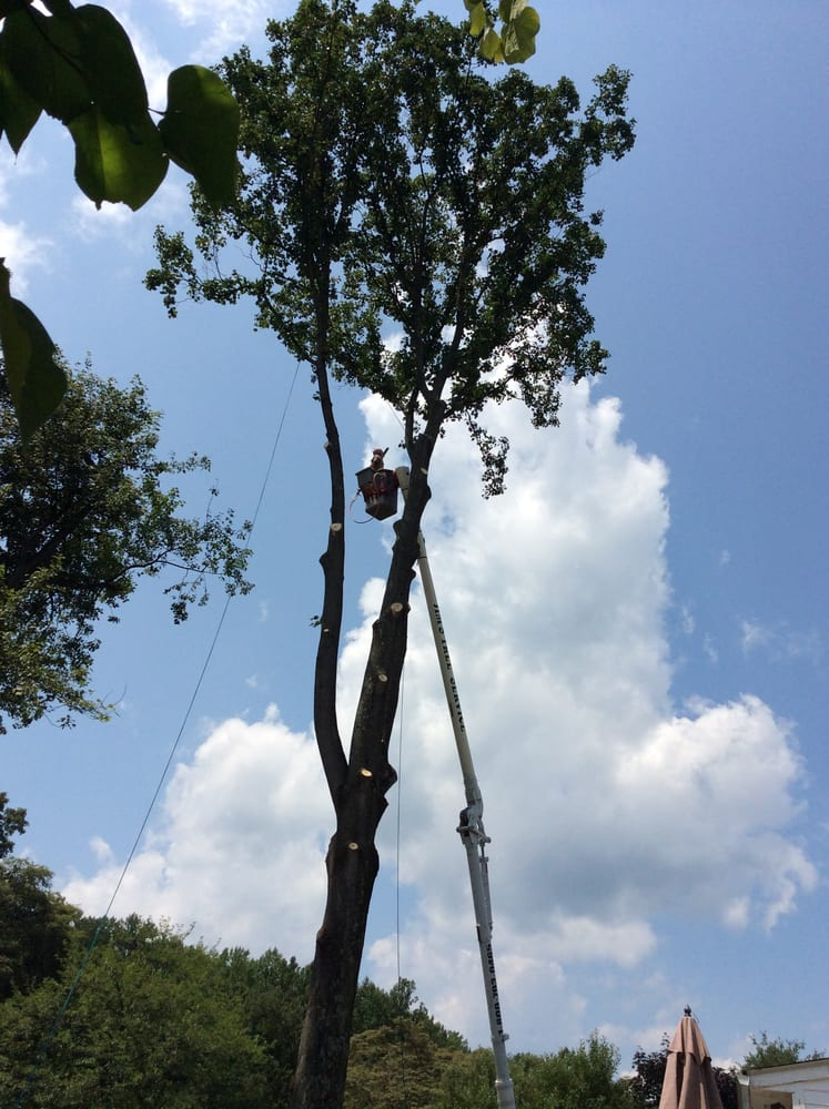Jim's Tree Service & Landscaping: Mount Bethel, PA