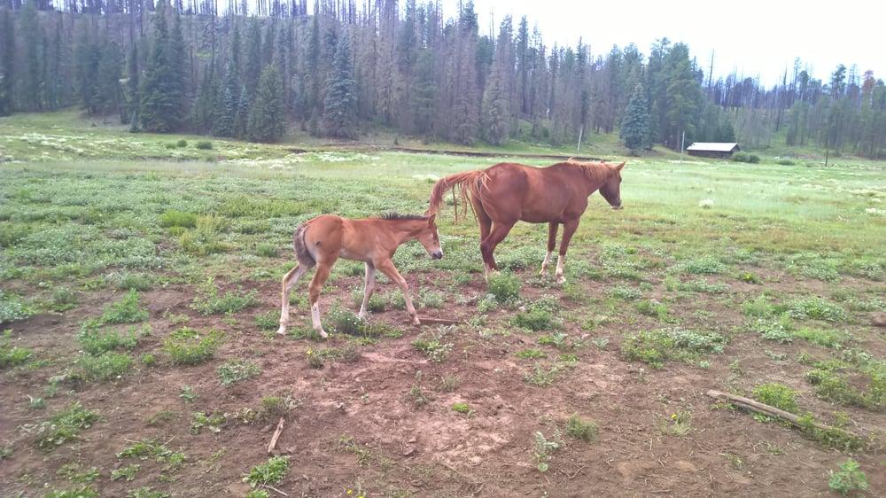 Sprucedale Guest Ranch: Alpine, AZ