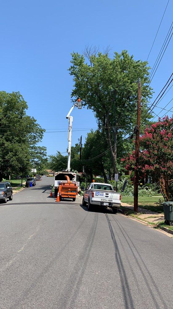 Ax Tree Services: Falls Church, VA