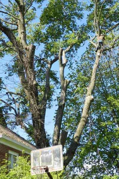Clean Cut Tree & Landscape: 8612 Tralee Ct, Batavia, OH