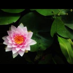 Photo Of Van Ness Water Gardens   Upland, CA, United States. Hollandia