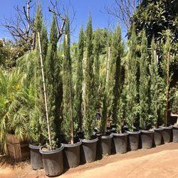 Photo Of Halls Plant Nursery Temecula Ca United States