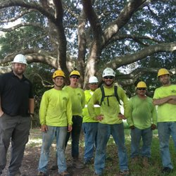 Photo Of Texas Tree Team Houston Tx United States Red Pruning
