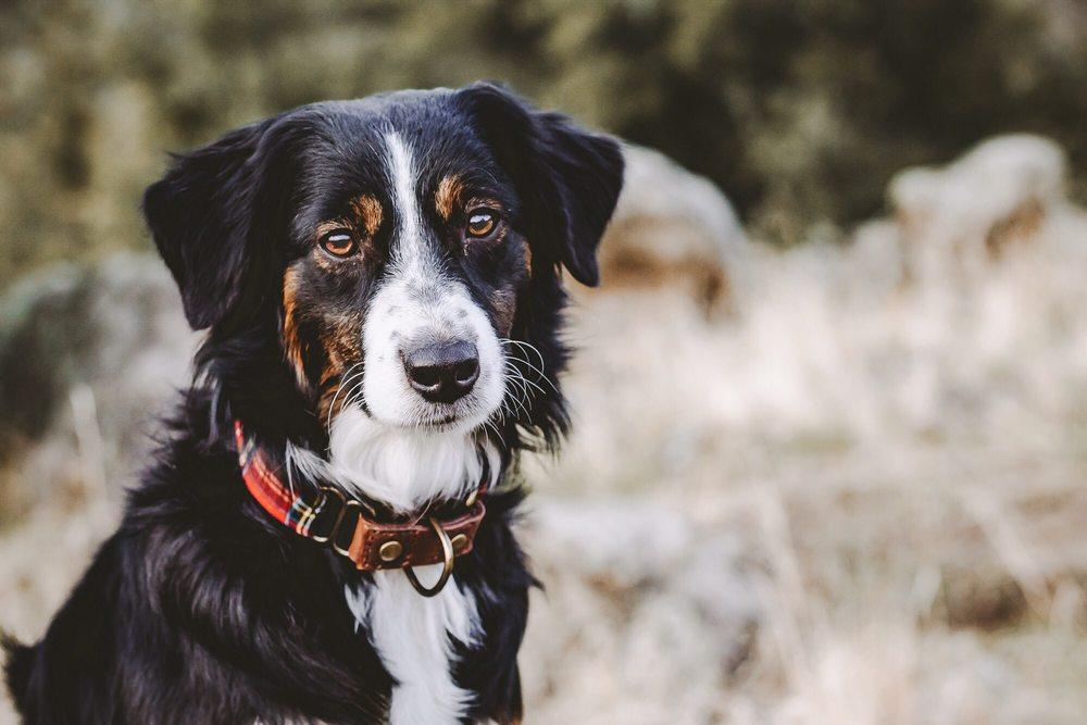 BK9 Private Dog Training: Idaho Falls, CA