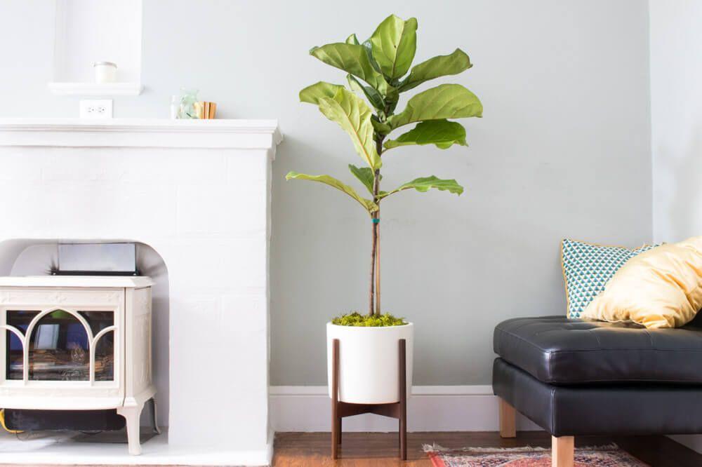 Elegant Interior Plant Design San Jose