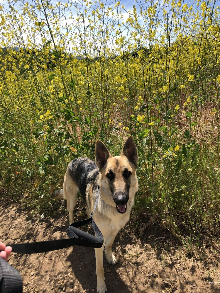 Sawpi Trails Community Park: 2225 N Westlake Blvd, Thousand Oaks, CA