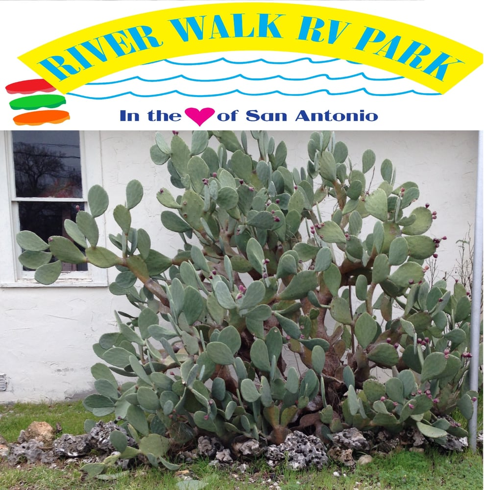 the issue of river pollution and the example of the san antonio river The texas commission on environmental quality monitors pollution and issues permits for discharge of pollutants texas aquatic science water for people and the environment was written and edited by author which merges with the blanco river and eventually flows into san antonio bay.