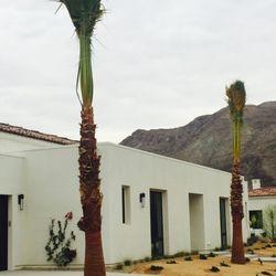 Photo Of Desert Jool Farms Thermal Ca United States Washingtonia Hybrid Palms