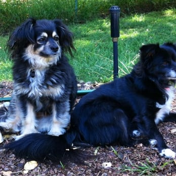 Dog Grooming Montclair Oakland Ca