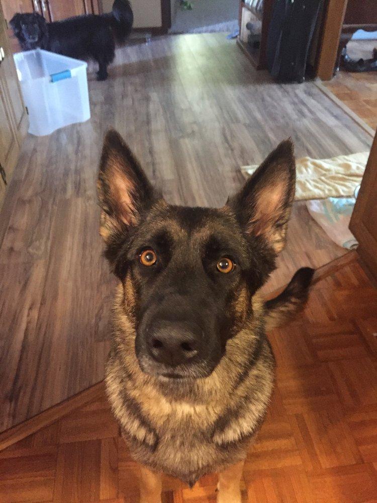 Howie's Happy Dog Training: Columbia, MO