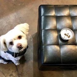 Dog Friendly Coffee Shops Portland, OR - Last Updated