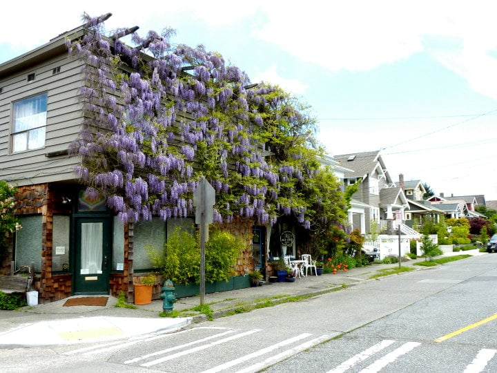 Seattle Institute for Sex Therapy, Education & Research | 100 NE 56th St, Seattle, WA, 98105 | +1 (206) 522-8588
