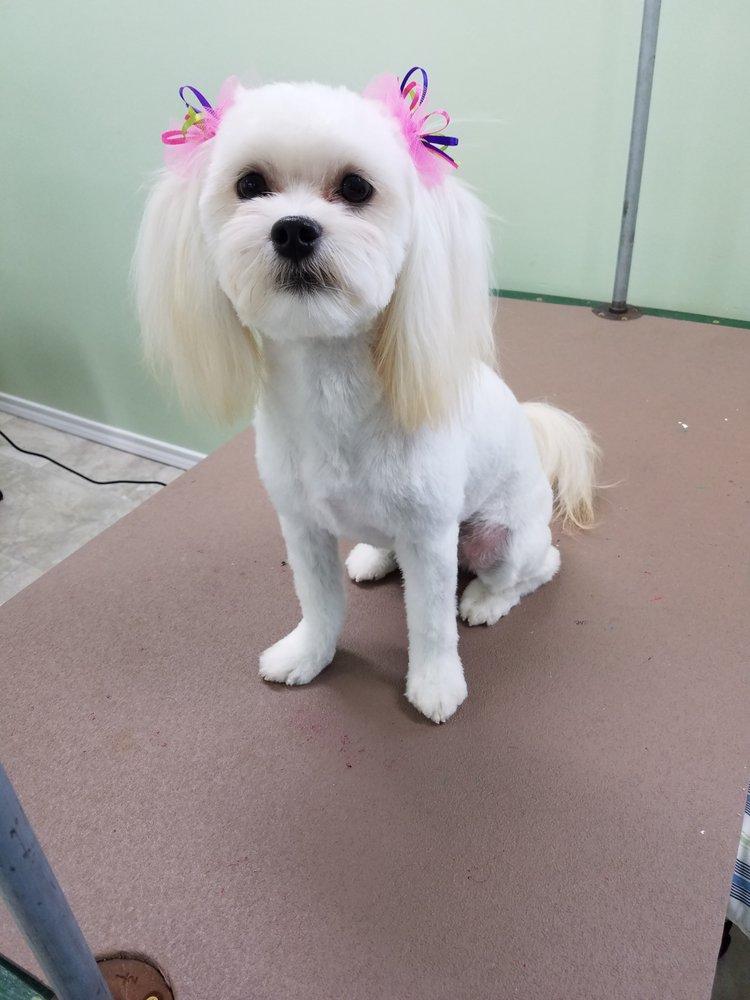Jamie's Dog House Grooming: 2512 County Rd 2308, Sulphur Springs, TX