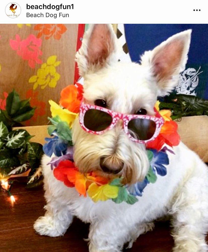 Beach Dog Fun