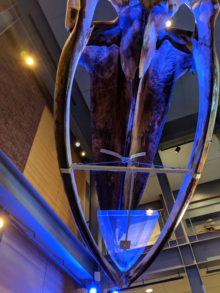 Social Spots from New Bedford Whaling Museum