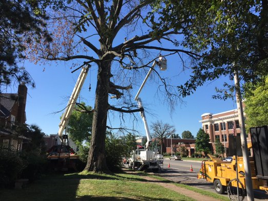 Pruden Tree Service: 8160 State Rte 56, Owensboro, KY