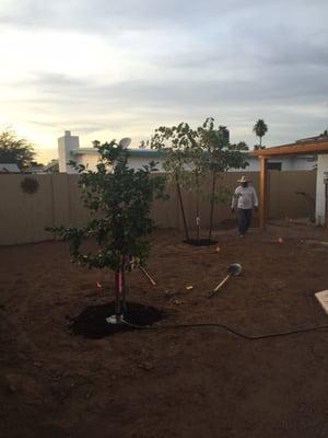 Treeland Nurseries 2900 S Country Club Dr Y Mesa Az Plants Trees Etc Whole Mapquest