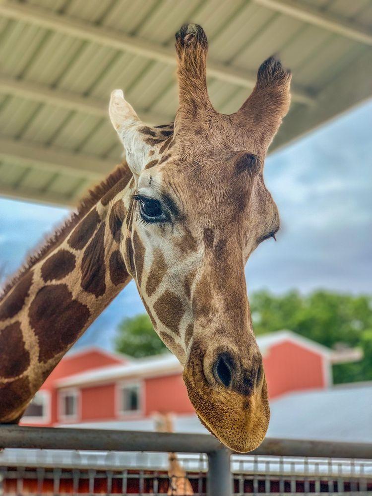 Wild Wilderness Drive-Through Safari: 20923 Safari Rd, Gentry, AR