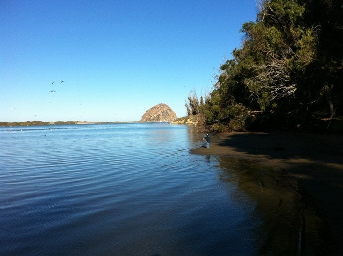 hiking the beach while watching sea lions at morro bay. Black Bedroom Furniture Sets. Home Design Ideas