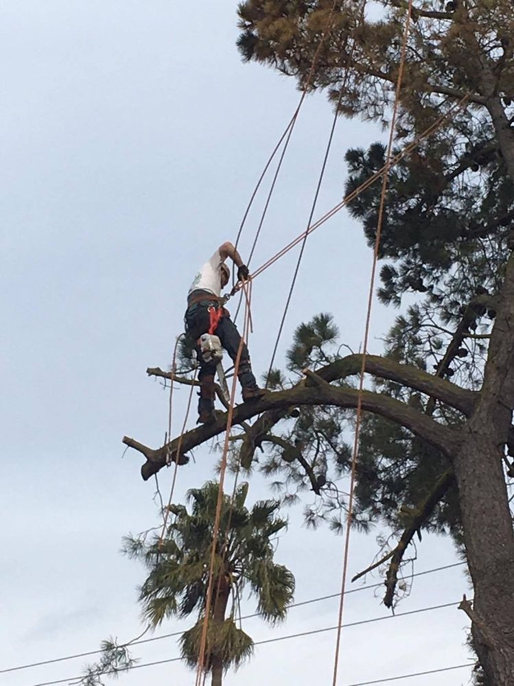 AM/PM Tree Services: 100 Admiral Callaghan Ln, Vallejo, CA