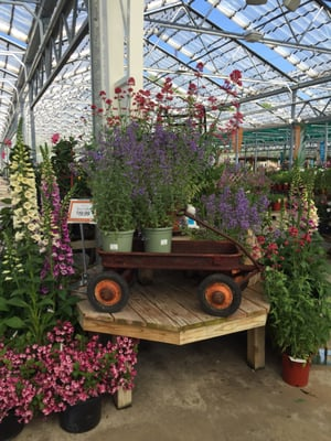 Beautiful Petitti Garden Centers 33777 Chester Rd Avon, OH General Merchandise Retail    MapQuest
