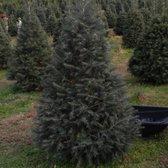 photo of moose apple christmas tree farm berryville va united states beautiful - Moose Apple Christmas Tree Farm
