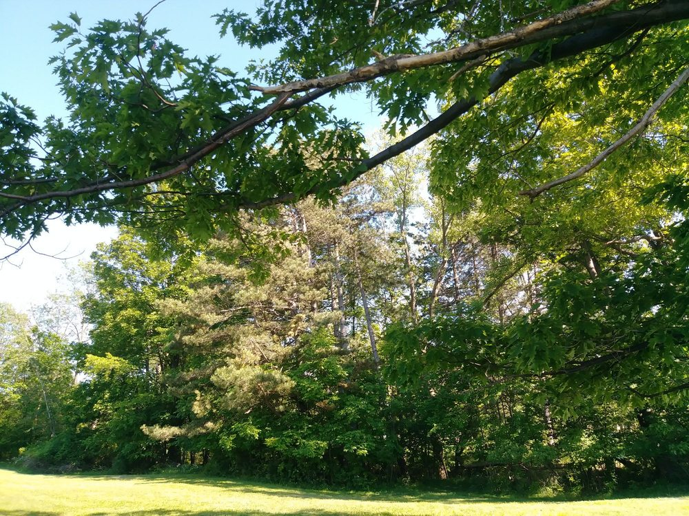 Arkwright Hills Campgrounds: 2942 Route 83, Fredonia, NY