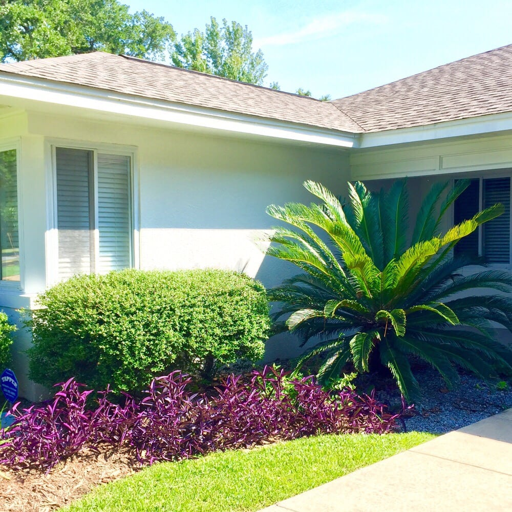 Tnt Auto Sales >> Sago Palms are a great touch to any property! - Yelp